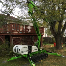 green-extraction-technologies-corrective-pruning