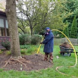 green-extraction-technologies-root-collar-excavation